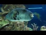 Московский океанариум. Ядовитые рыбы
